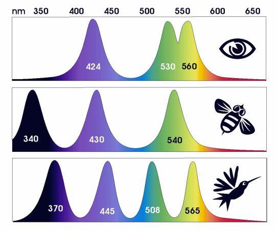 04_spectrum